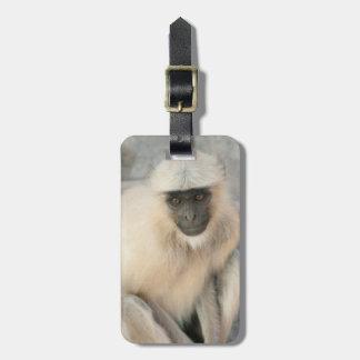 Langur Monkey, Amber Fort, Jaipur, Rajasthan Bag Tag