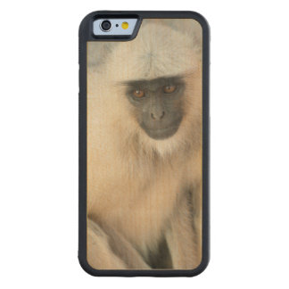 Langur Monkey, Amber Fort, Jaipur, Rajasthan Carved® Maple iPhone 6 Bumper