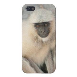 Langur Monkey, Amber Fort, Jaipur, Rajasthan Cover For iPhone SE/5/5s