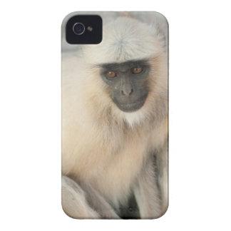 Langur Monkey, Amber Fort, Jaipur, Rajasthan iPhone 4 Case-Mate Case