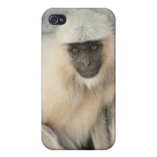 Langur Monkey, Amber Fort, Jaipur, Rajasthan iPhone 4 Cover