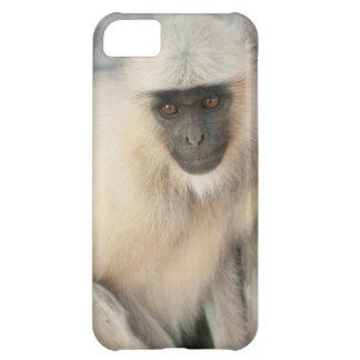 Langur Monkey, Amber Fort, Jaipur, Rajasthan iPhone 5C Cover