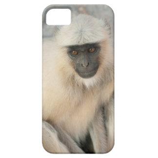 Langur Monkey, Amber Fort, Jaipur, Rajasthan iPhone SE/5/5s Case