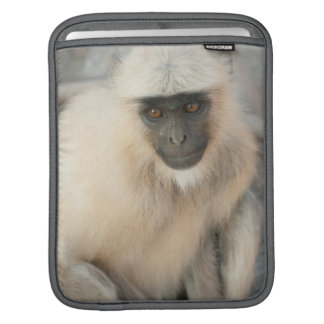 Langur Monkey, Amber Fort, Jaipur, Rajasthan Sleeve For iPads