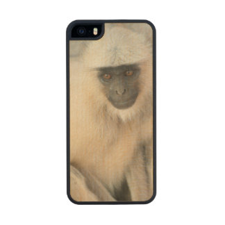 Langur Monkey, Amber Fort, Jaipur, Rajasthan Wood Phone Case For iPhone SE/5/5s