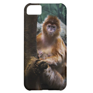 Langur Monkey Cover For iPhone 5C