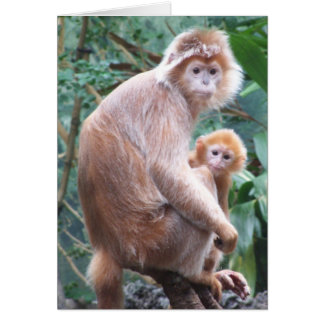 Langur Monkey Mother & Baby Card