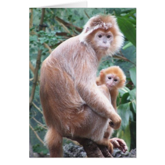 Langur Monkey Mother & Baby Card