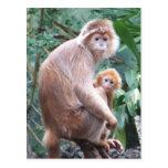 Langur Monkey Mother & Baby Postcard