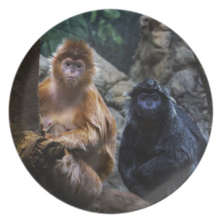 Langur Monkey Plates