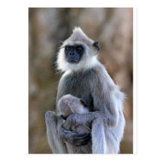 Langur monkey postcard