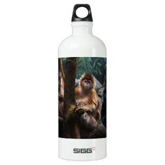 Langur Monkey Water Bottle