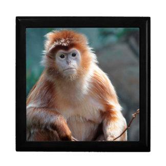 Langur Monkey Wildlife Animal Photo Trinket Boxes