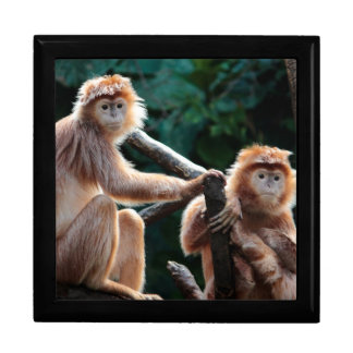 Langur Monkey Wildlife Animal Photo Gift Boxes