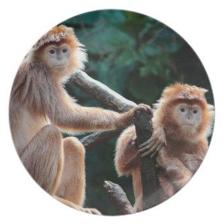 Langur Monkey Wildlife Animal Photo Dinner Plate