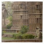 Langurs de Hanuman o Negro-hecho frente, campo com Azulejo Cerámica