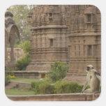 Langurs de Hanuman o Negro-hecho frente, campo Colcomanias Cuadradases
