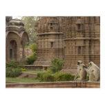 Langurs de Hanuman o Negro-hecho frente, campo Postal