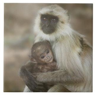 Langurs de la Negro-cara, madre con el bebé, adent Azulejo Cuadrado Grande