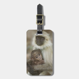 Langurs de la Negro-cara, madre con el bebé, Etiquetas Para Maletas
