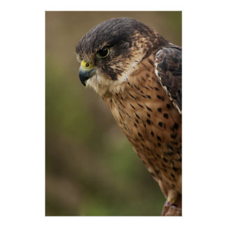 Lanner Falcon 2 Poster