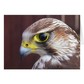 Lanner Falcon Card