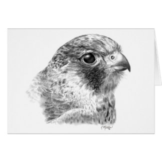 Lanner Falcon Drawing Card