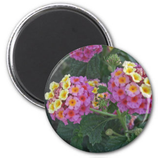 Lantana 1 refrigerator magnets