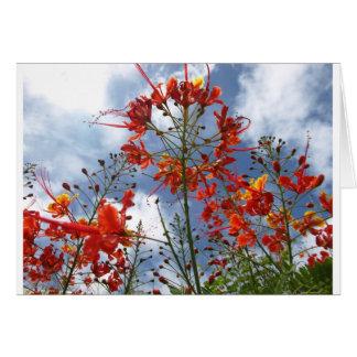 Lantana Blooms Card