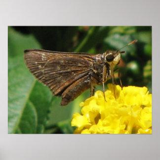 Lantana & Butterfly Poster