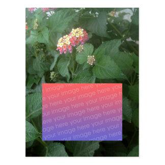Lantana Camara Postcard