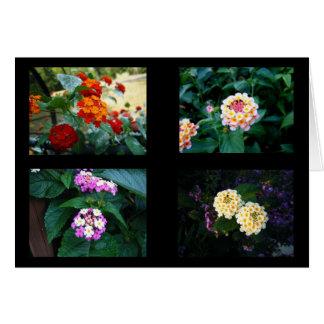 Lantana Colors Card