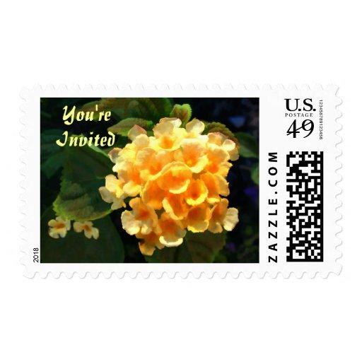 Lantana del amarillo amarillo sellos
