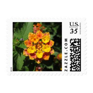 Lantana Desert Flower Postage