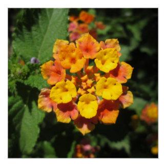 Lantana Desert Flower Poster