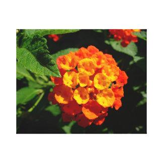 Lantana flower canvas