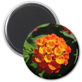 Lantana flower fridge magnets