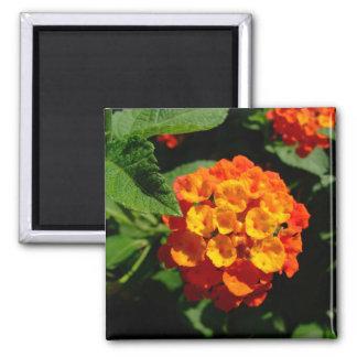 Lantana flower magnet
