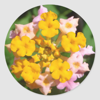 Lantana Flower with Ant Visitor Sticker