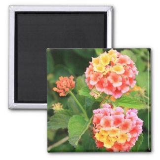 Lantana Flowers Magnet