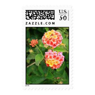 Lantana Flowers Postage