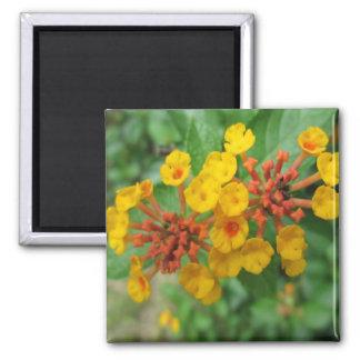 Lantana Garden Flower Yellow Magnets