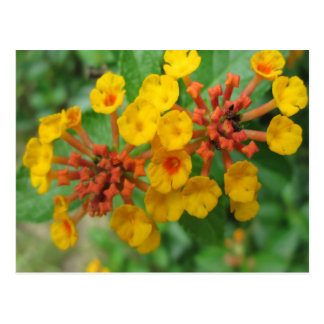 Lantana Garden Flower Yellow Postcard