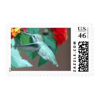 Lantana III Stamp