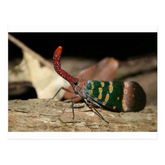 Lantern cicada postcard