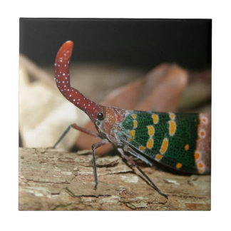 Lantern cicada ceramic tiles