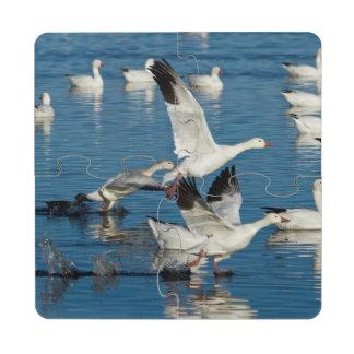 Lanzamiento de los gansos de nieve (Chen Posavasos De Puzzle