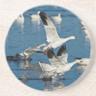 Lanzamiento de los gansos de nieve (Chen Posavasos Personalizados