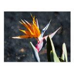 Lanzarote flow.jpg postales