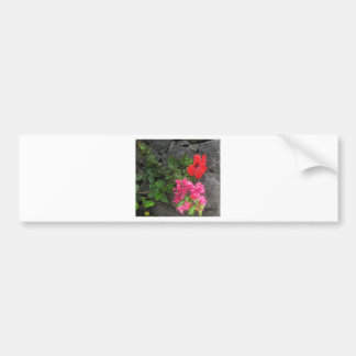 Lanzarote Lava Rock with Flowers Bumper Sticker